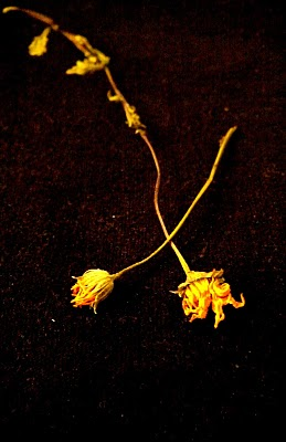 Two lost yellow flowers crossed paths in a dark world.